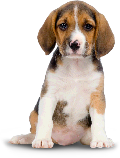 Cute dog PNG Image