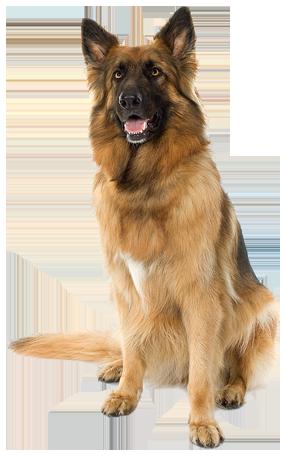Large sitting Dog