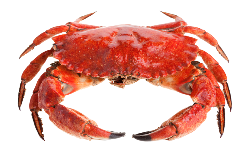 Cute Red Crab PNG Image