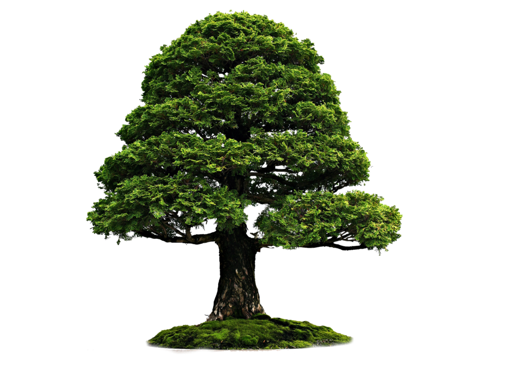 Large Tree With Grass PNG Image