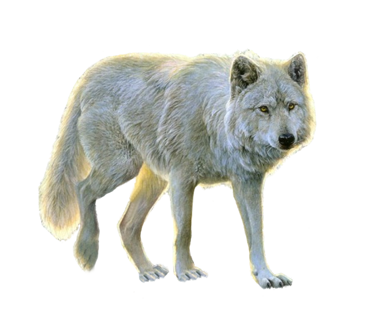 White Wolf PNG Image - PurePNG | Free transparent CC0 PNG ...
