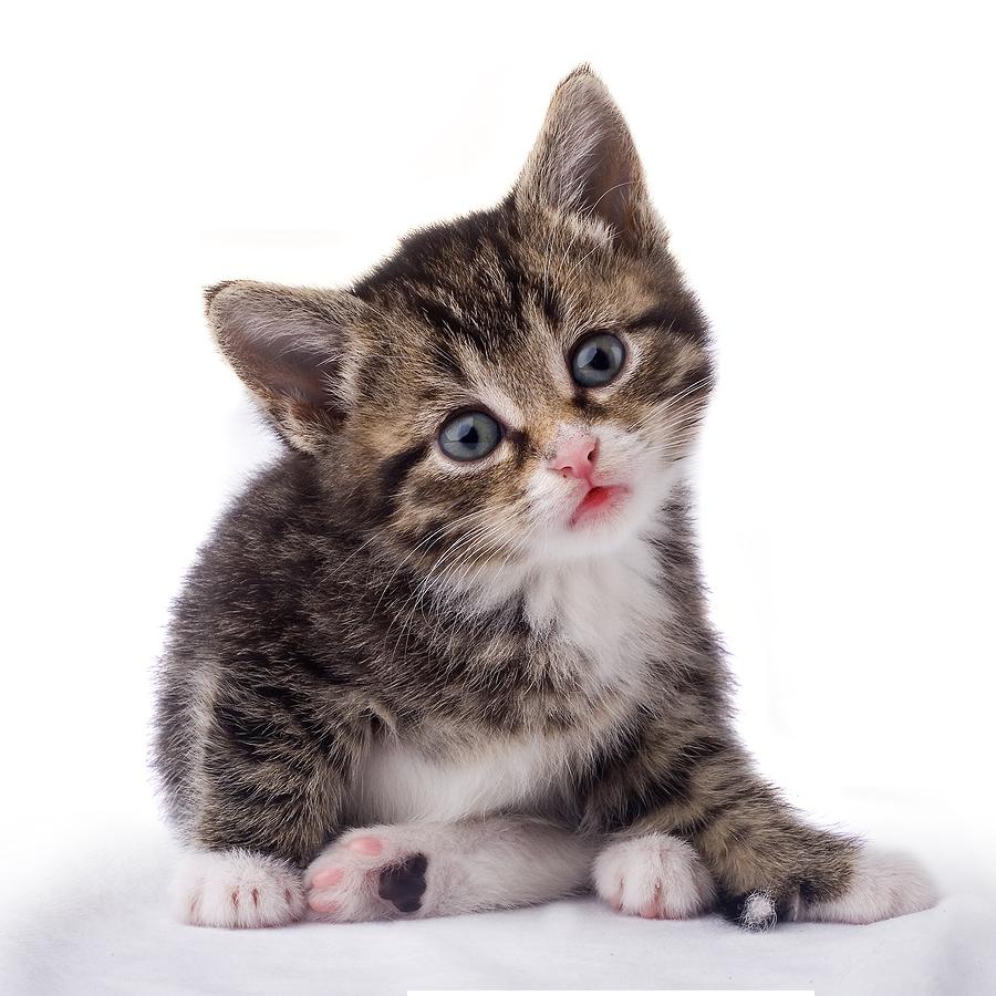 Black & White Cat PNG PNG Image - PurePNG | Free ...