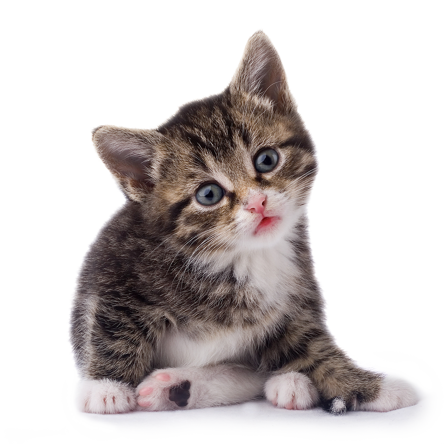 Black & White Cat PNG