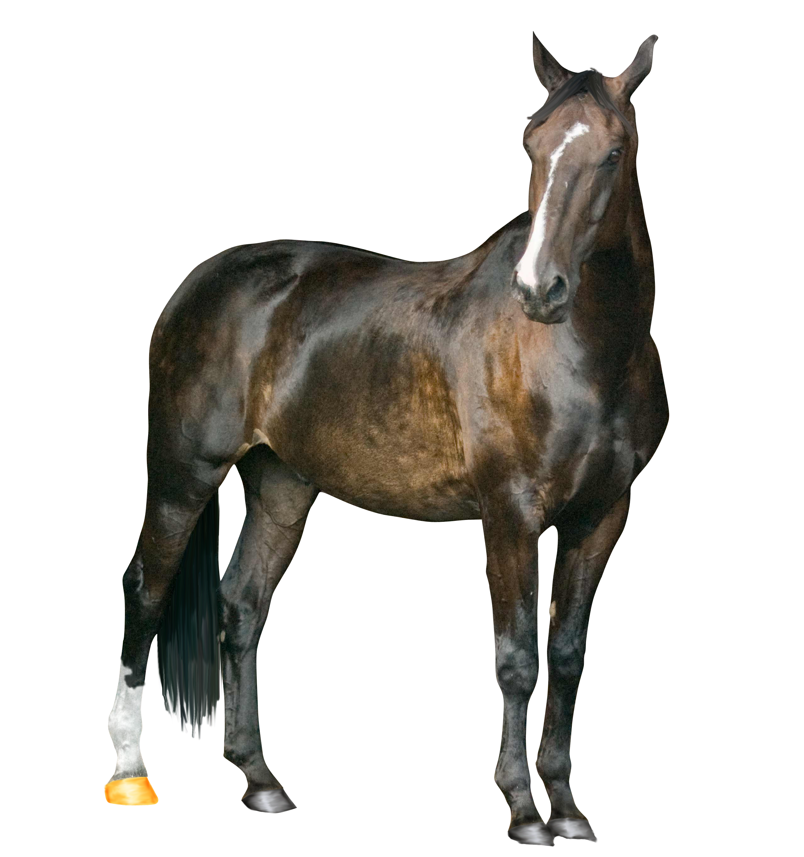 Horse PNG Image