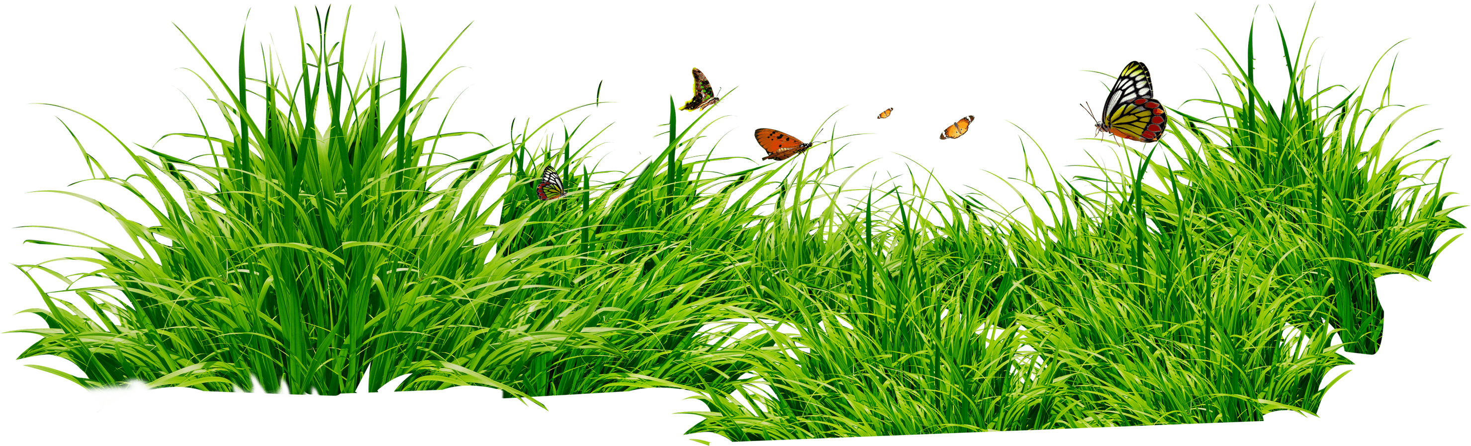 Grass Patch With Insects PNG Image