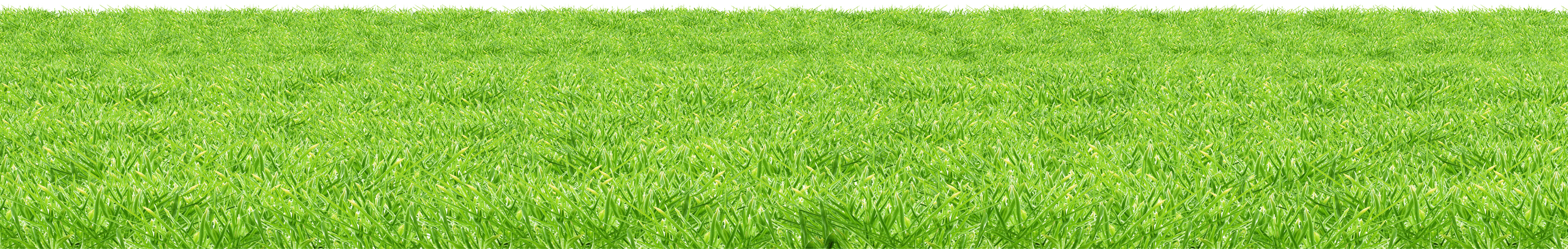 Grass Surface PNG Image