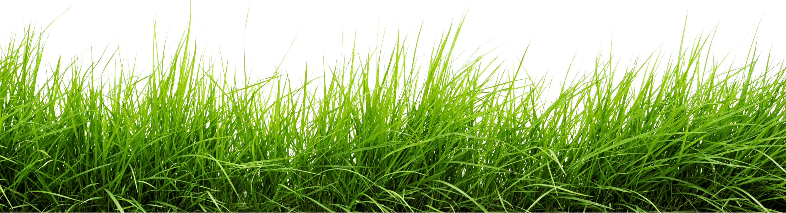 Line of grass png image purepng free transparent cc0 for Tall border grass