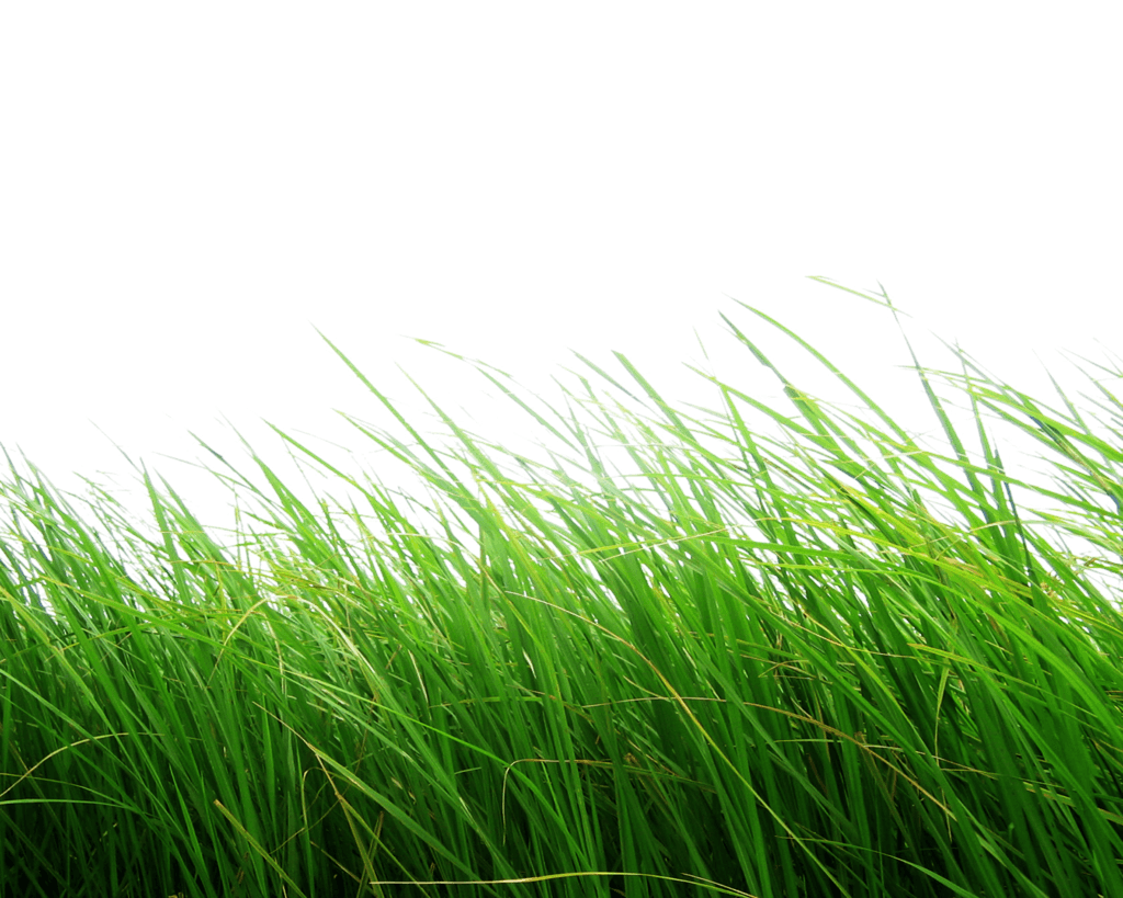 High Grass PNG Image
