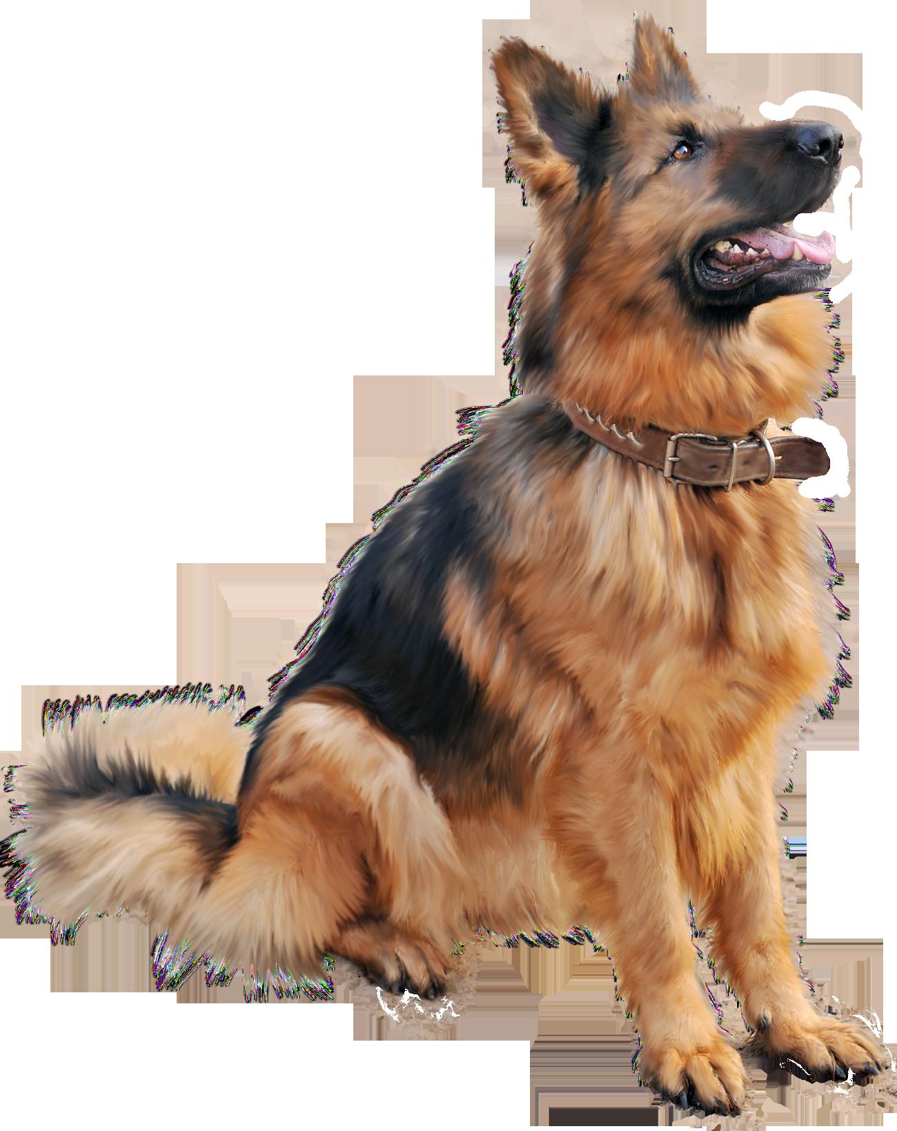 German shepherd dog sitting