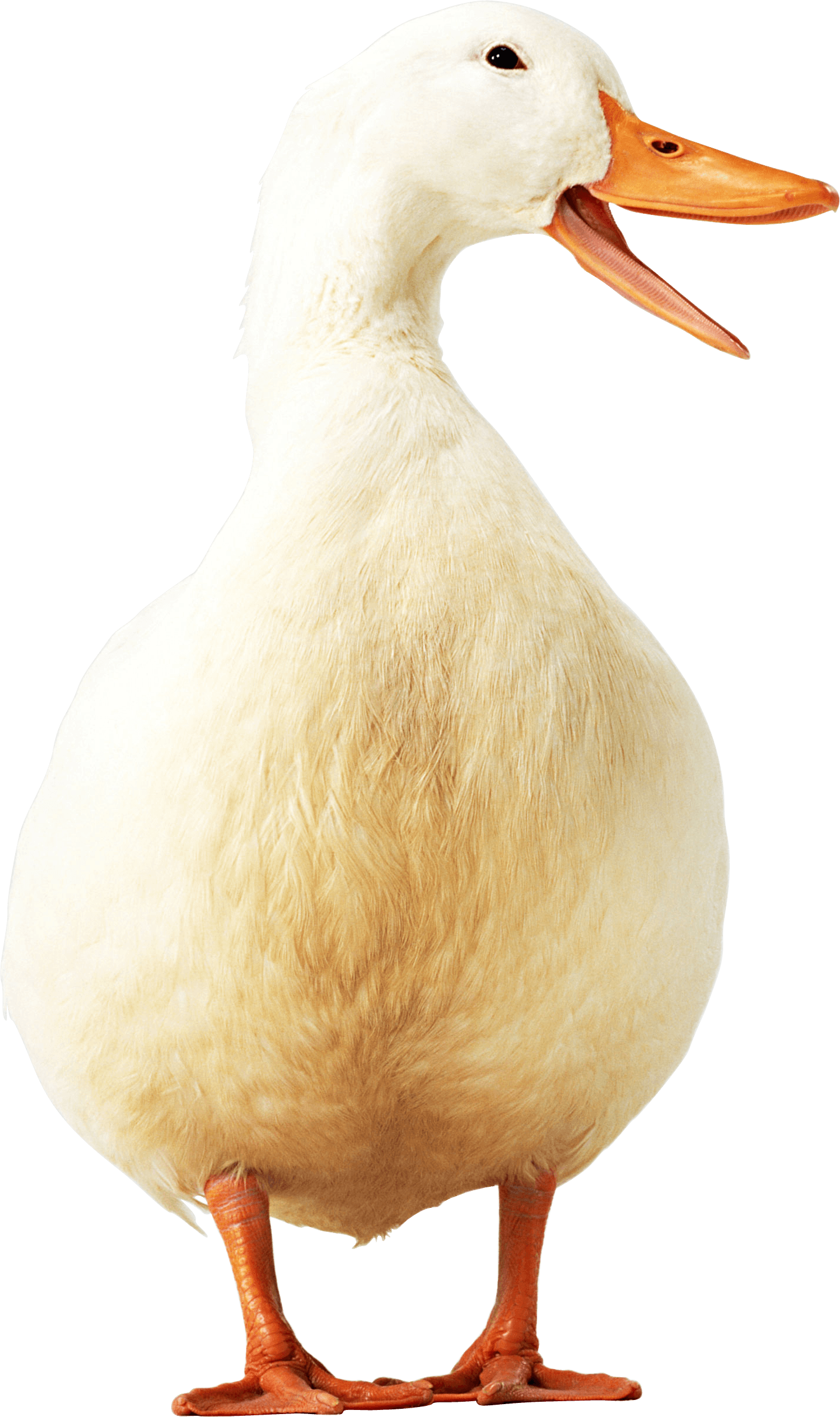 yellow Duck PNG Image