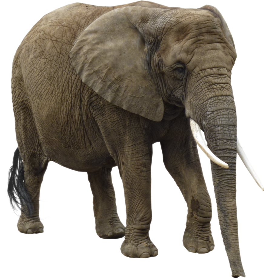 Download Elephant Png Image For Free Pngtree offers royal elephant png and vector images, as well as transparant background royal elephant clipart images and psd files. download elephant png image for free
