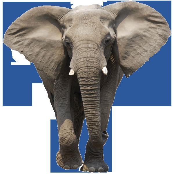 Elephant walking PNG Image