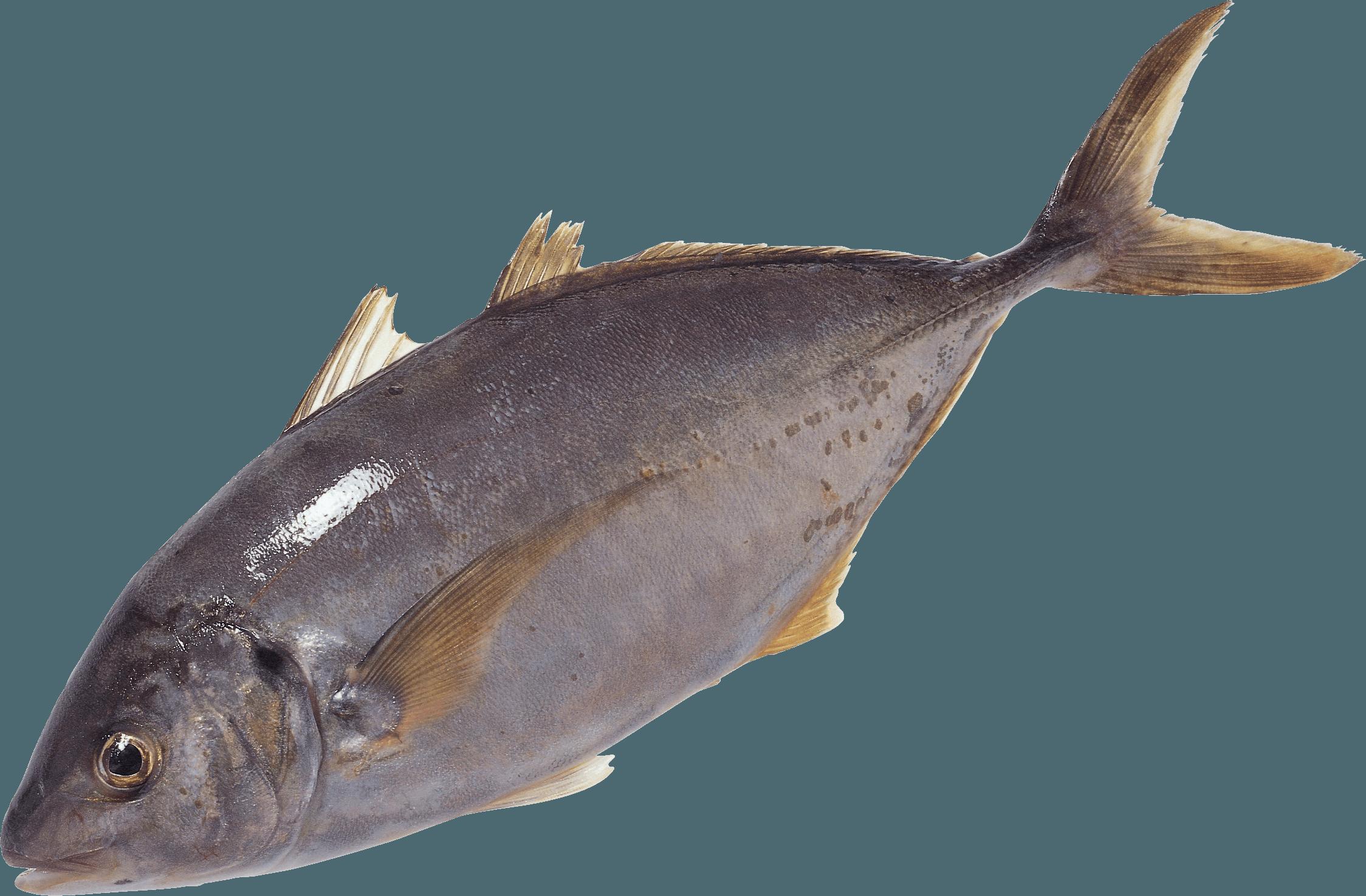 Fish swimming PNG Image