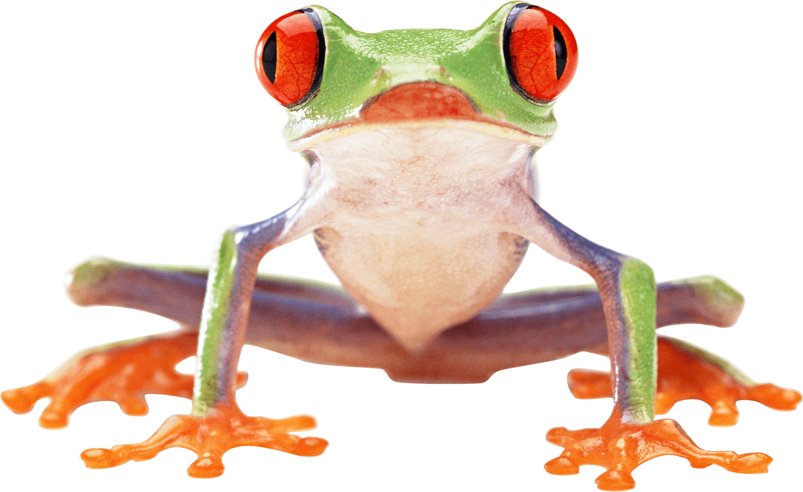 17-frog-png-image