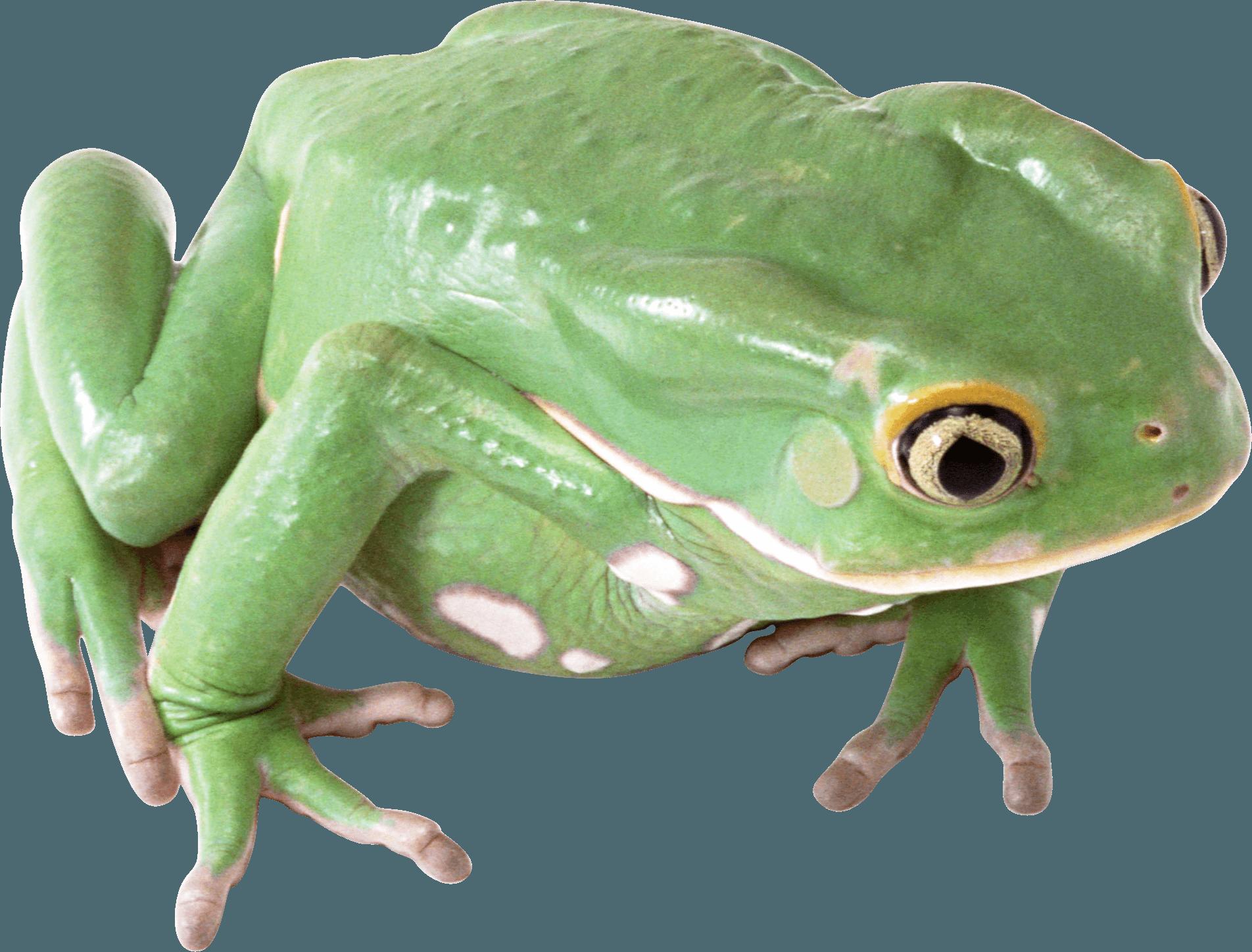 green frog PNG Image
