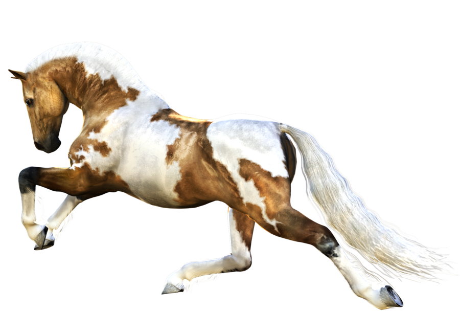 Horse running PNG Image