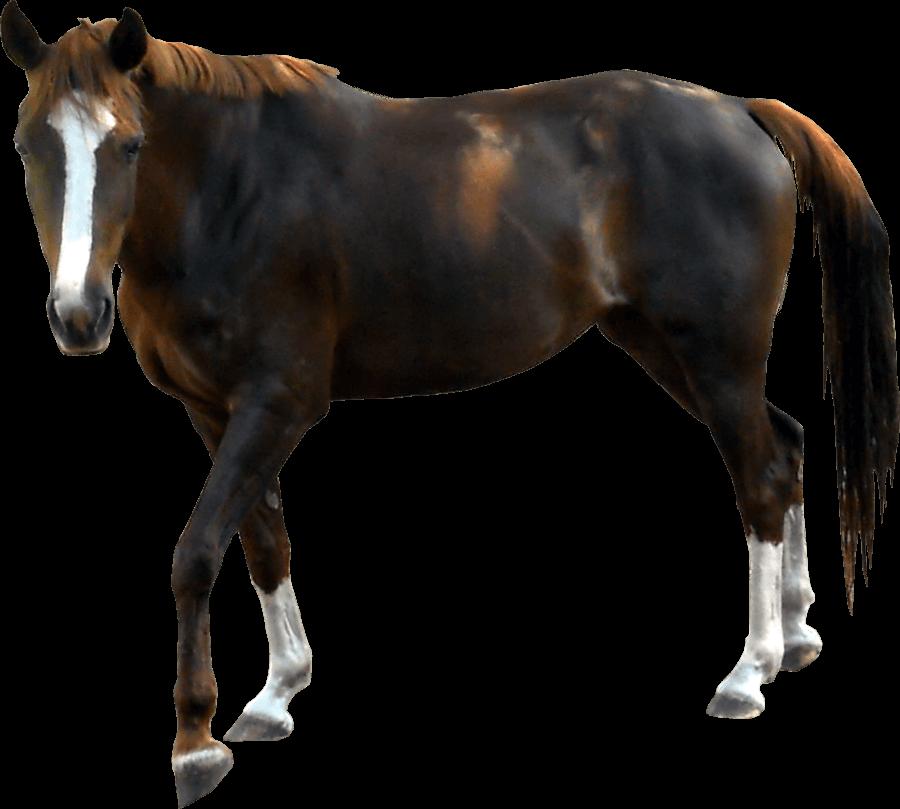 black horse PNG Image