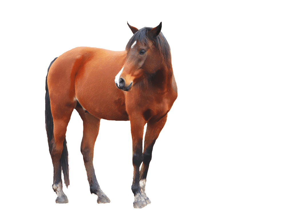 brown Horse PNG Image
