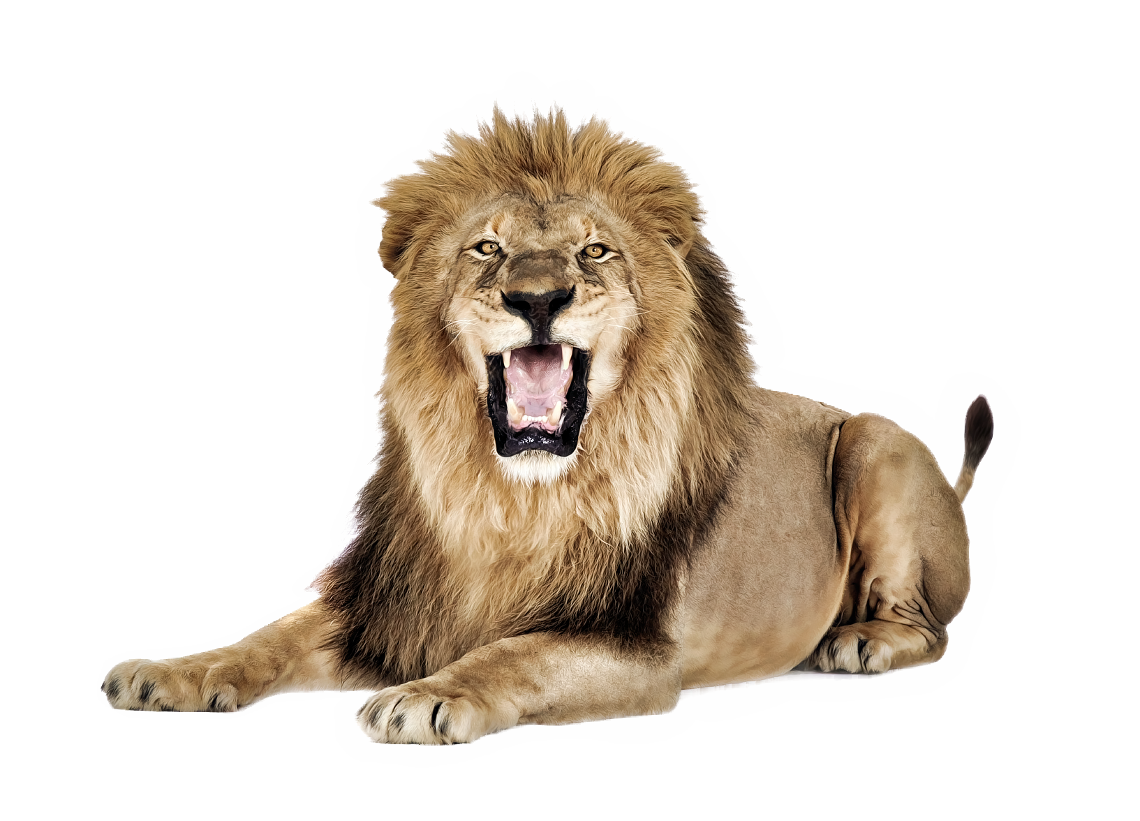 Big Explosion Png Png Image Purepng: Lion Roaring PNG Image - PurePNG