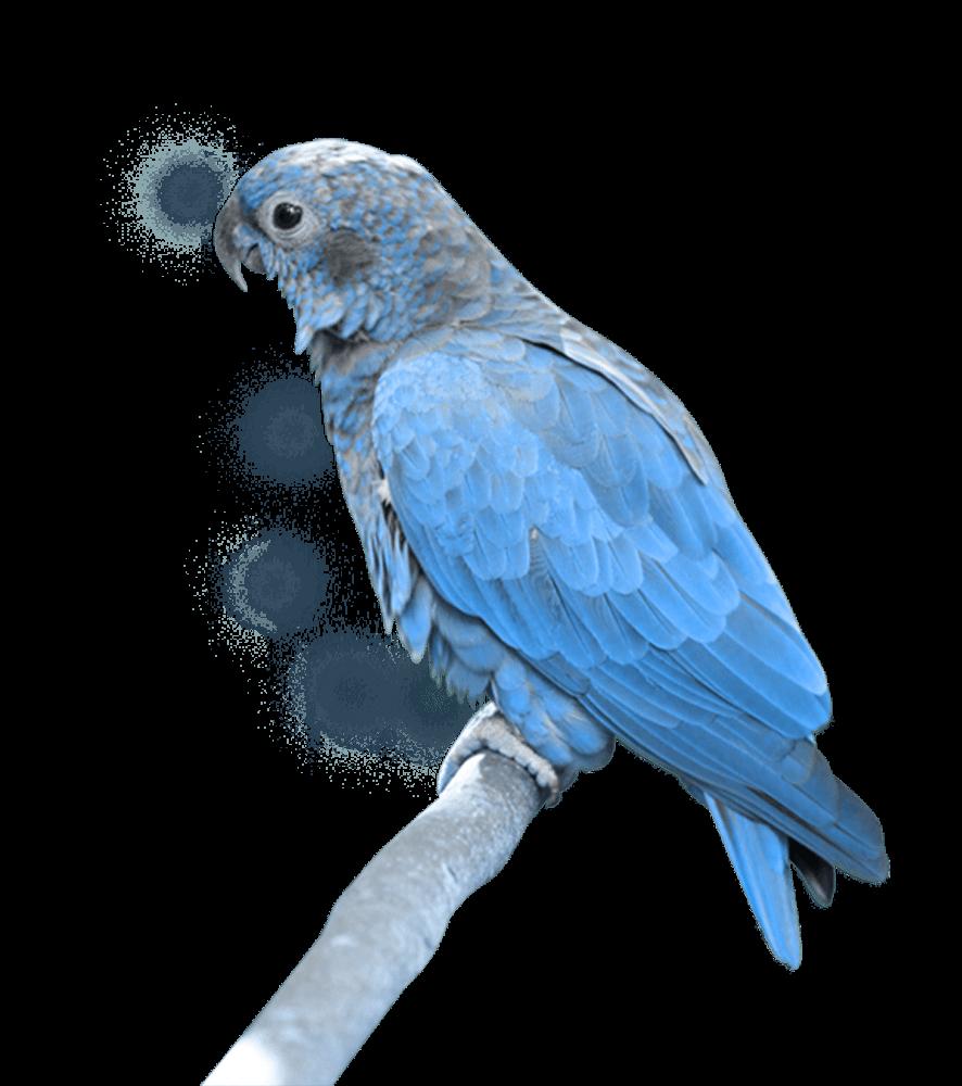 blue parrot sitting