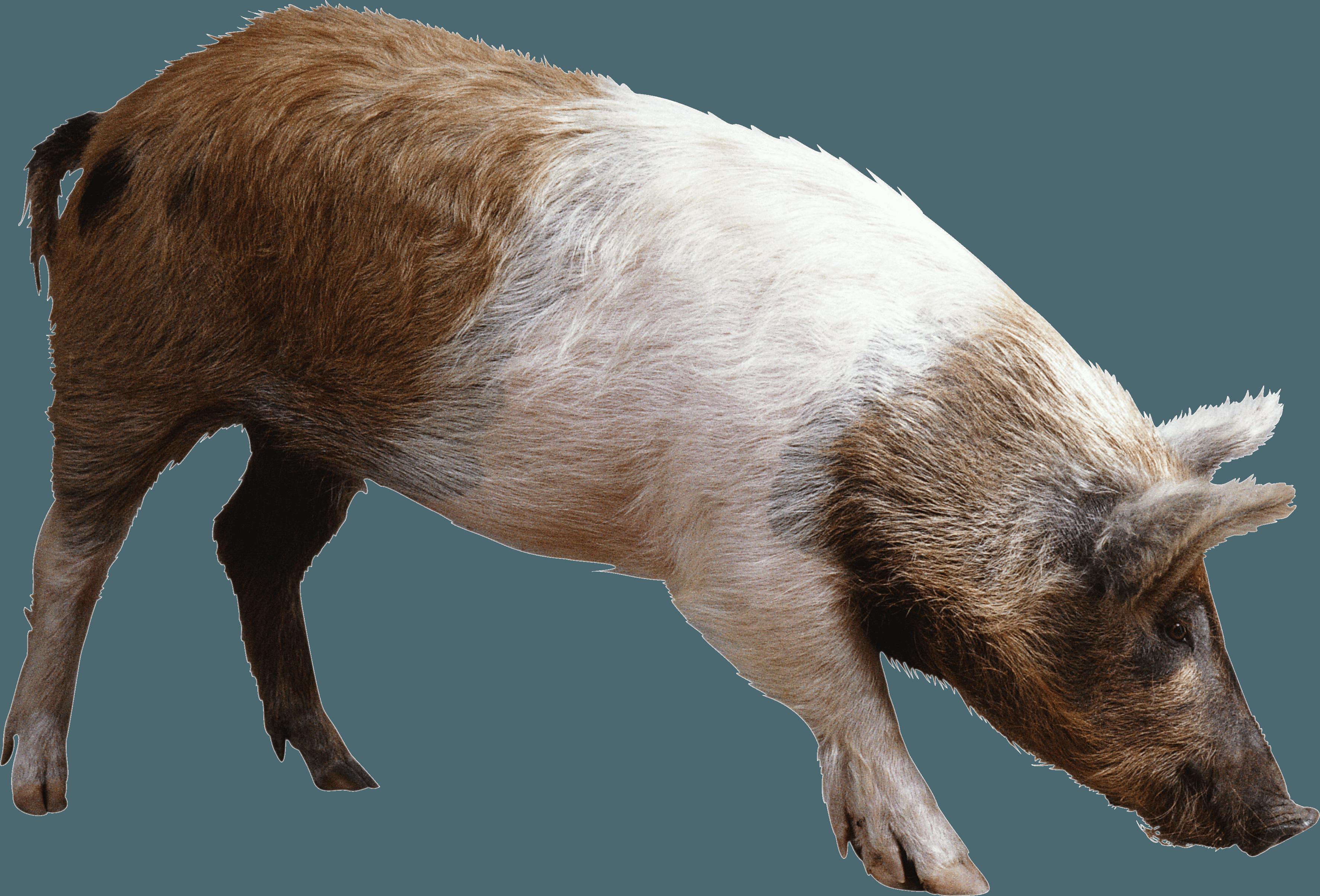 striped ping brown pig PNG Image