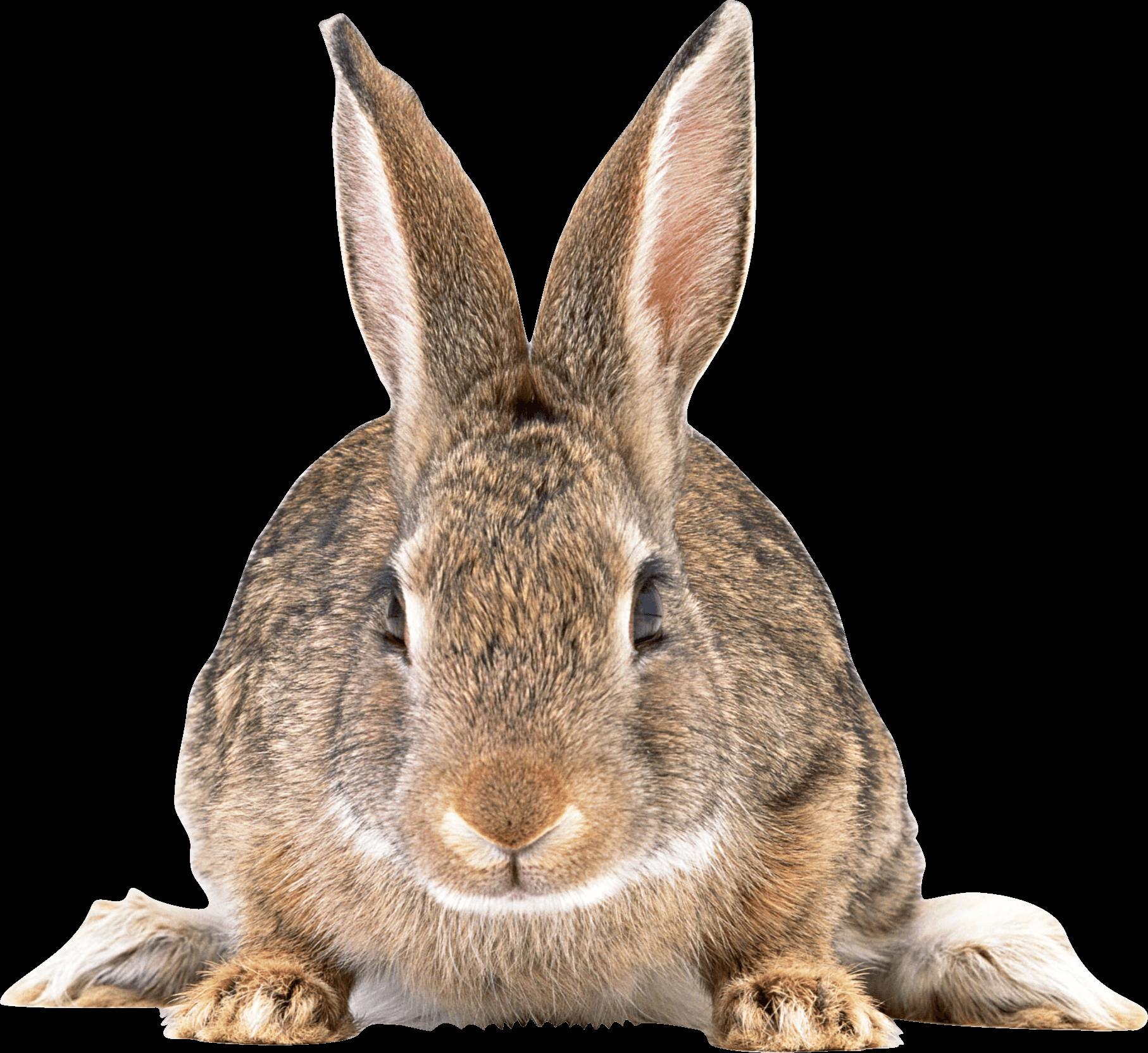 Cute brown rabbit