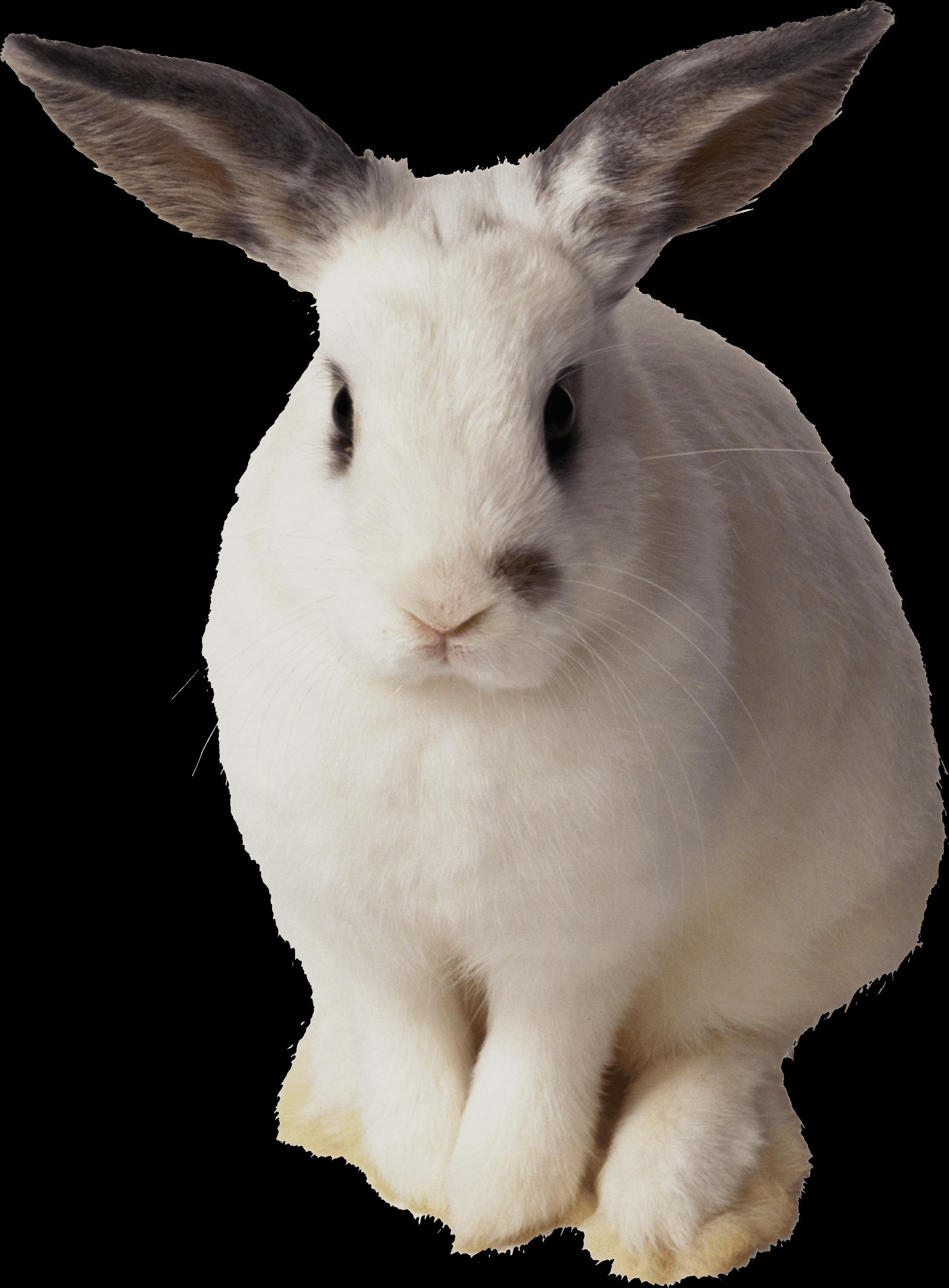 white rabbit sitting