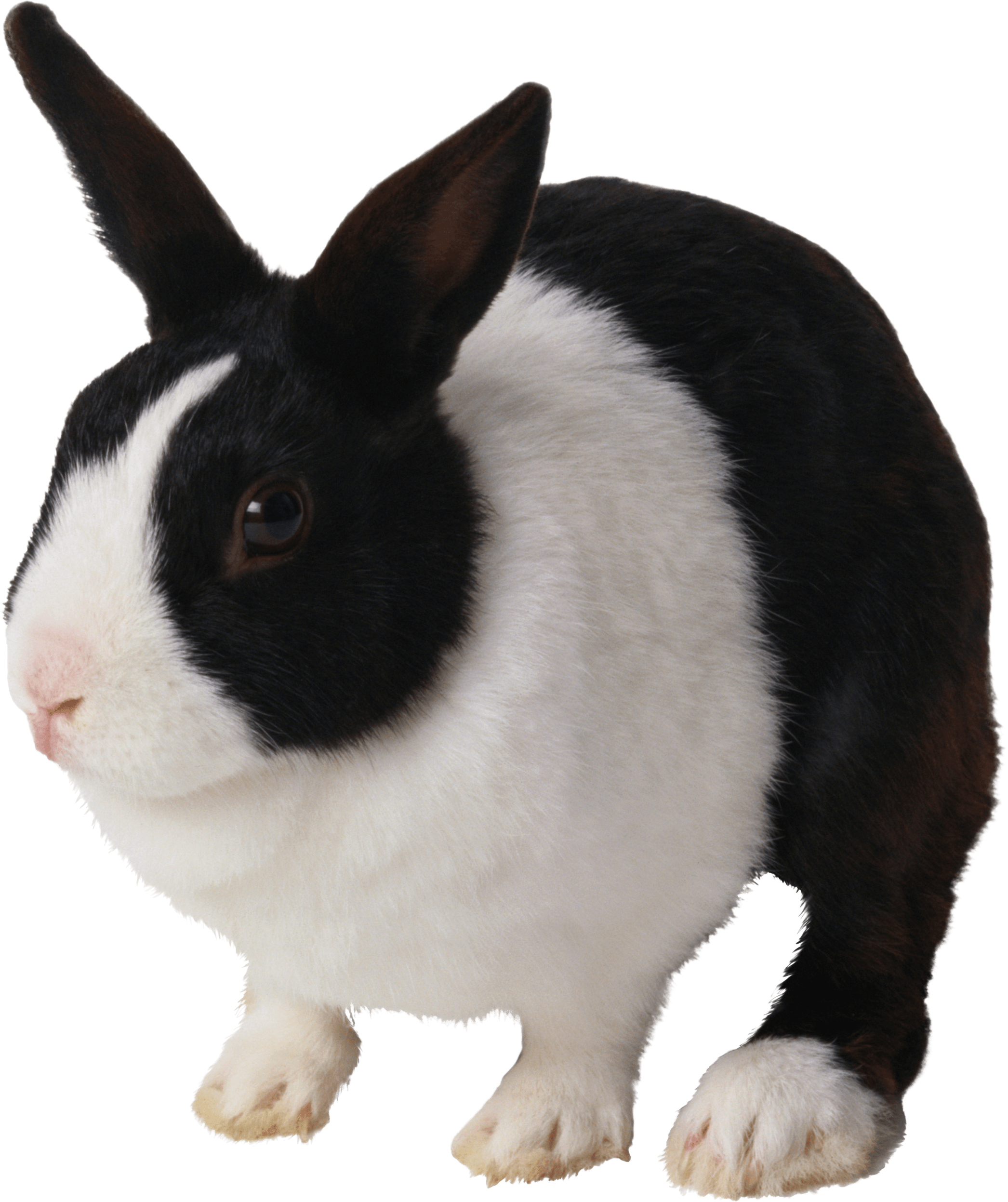 Black And White Rabbit Png Image