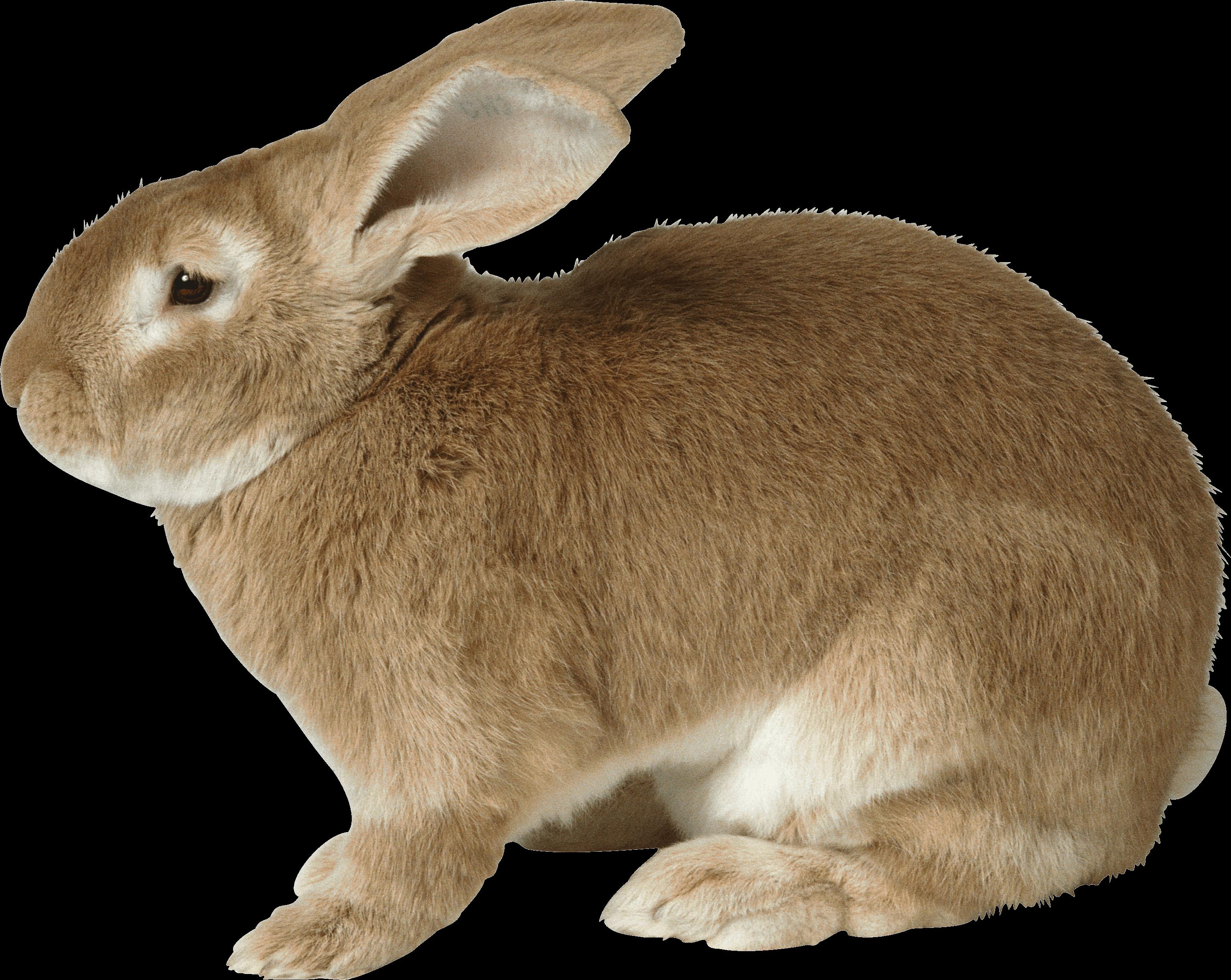 sad brown rabbit PNG Image