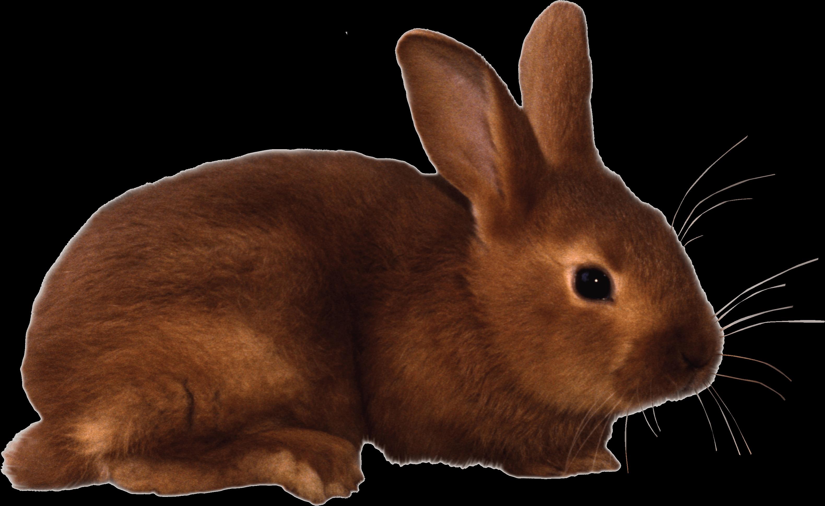 Brown rabbit PNG Image