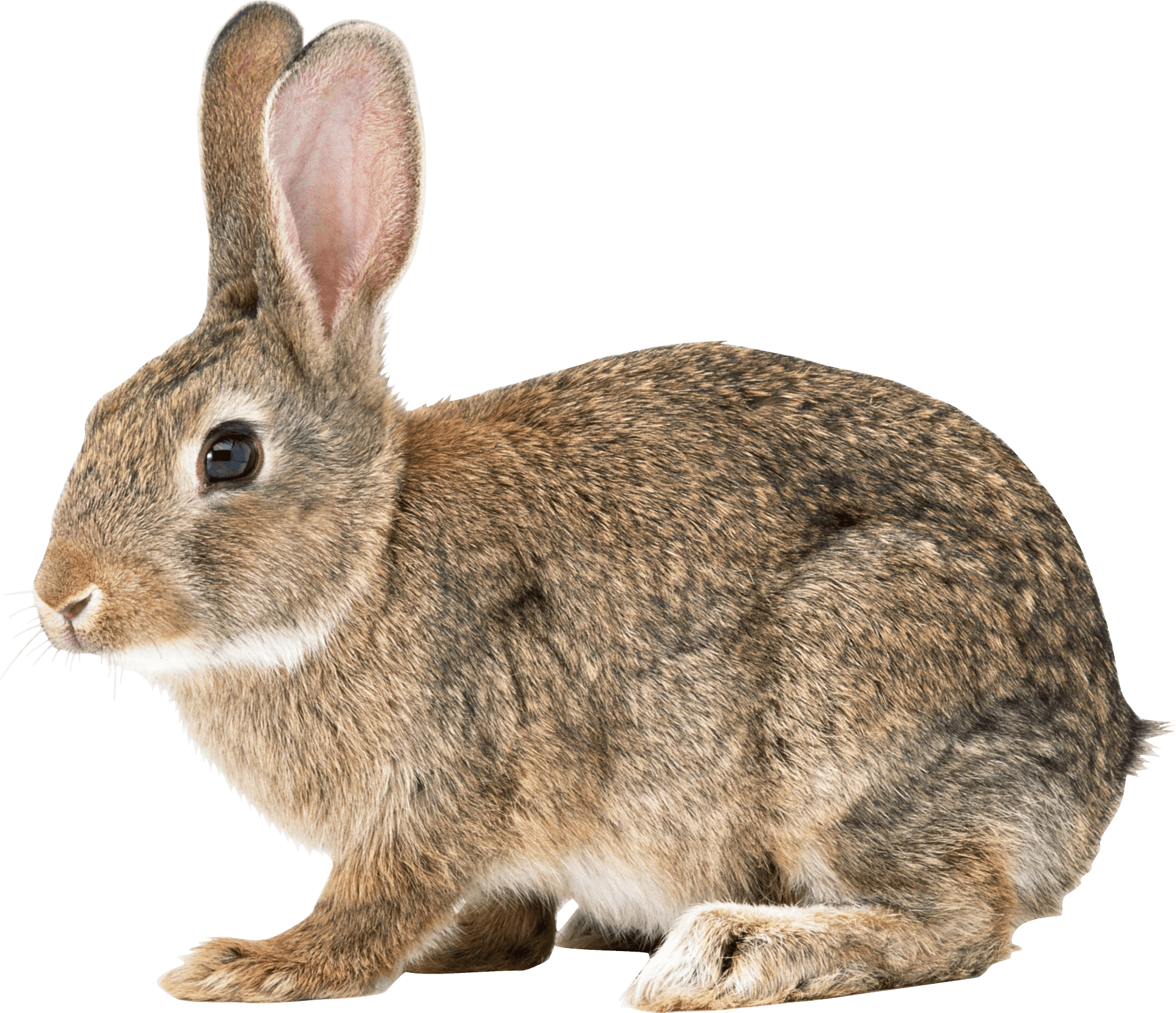 It's just a graphic of Ridiculous Cute Bunny Png Drawing
