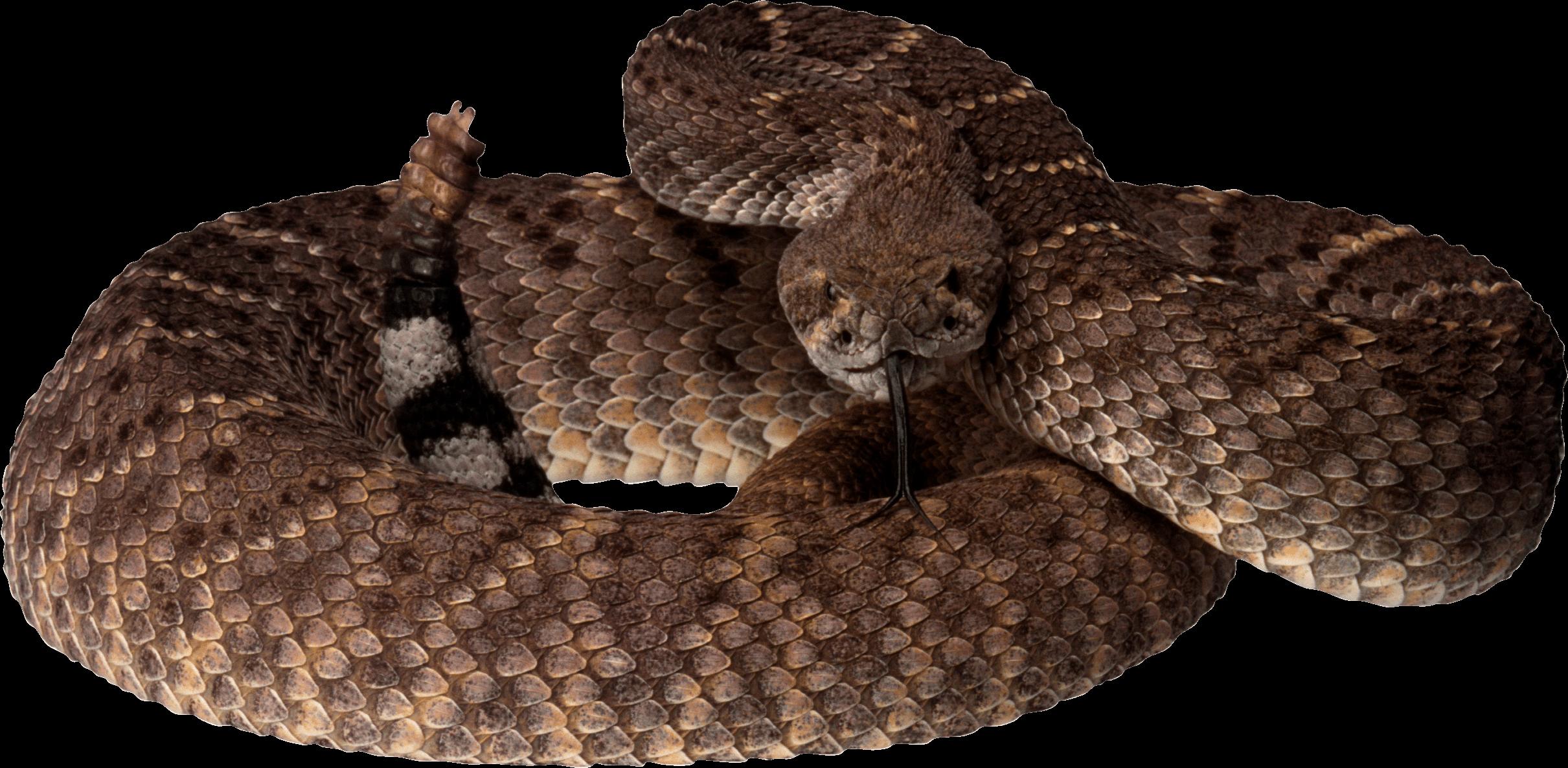 Brown Snake PNG Image