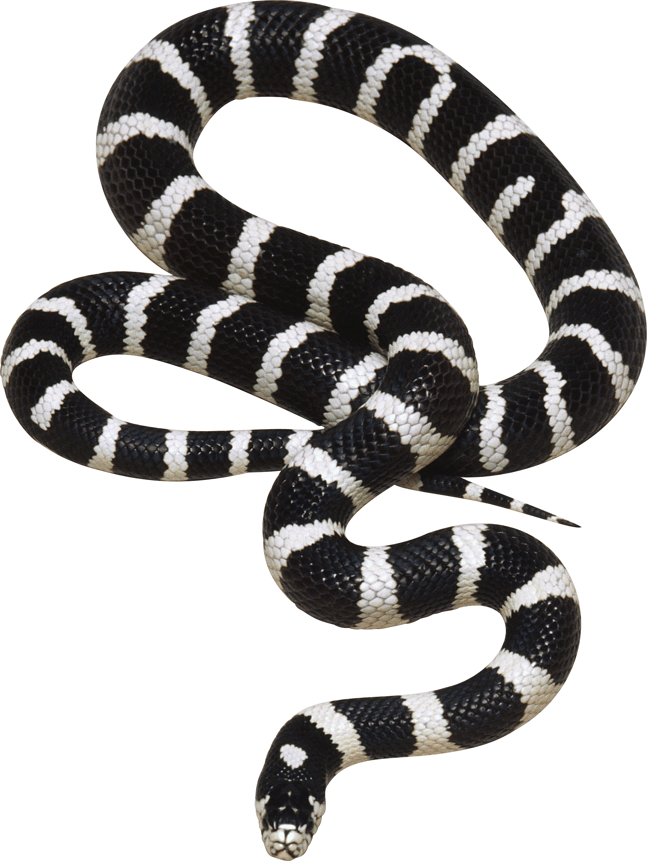 Black and White Snake PNG Image