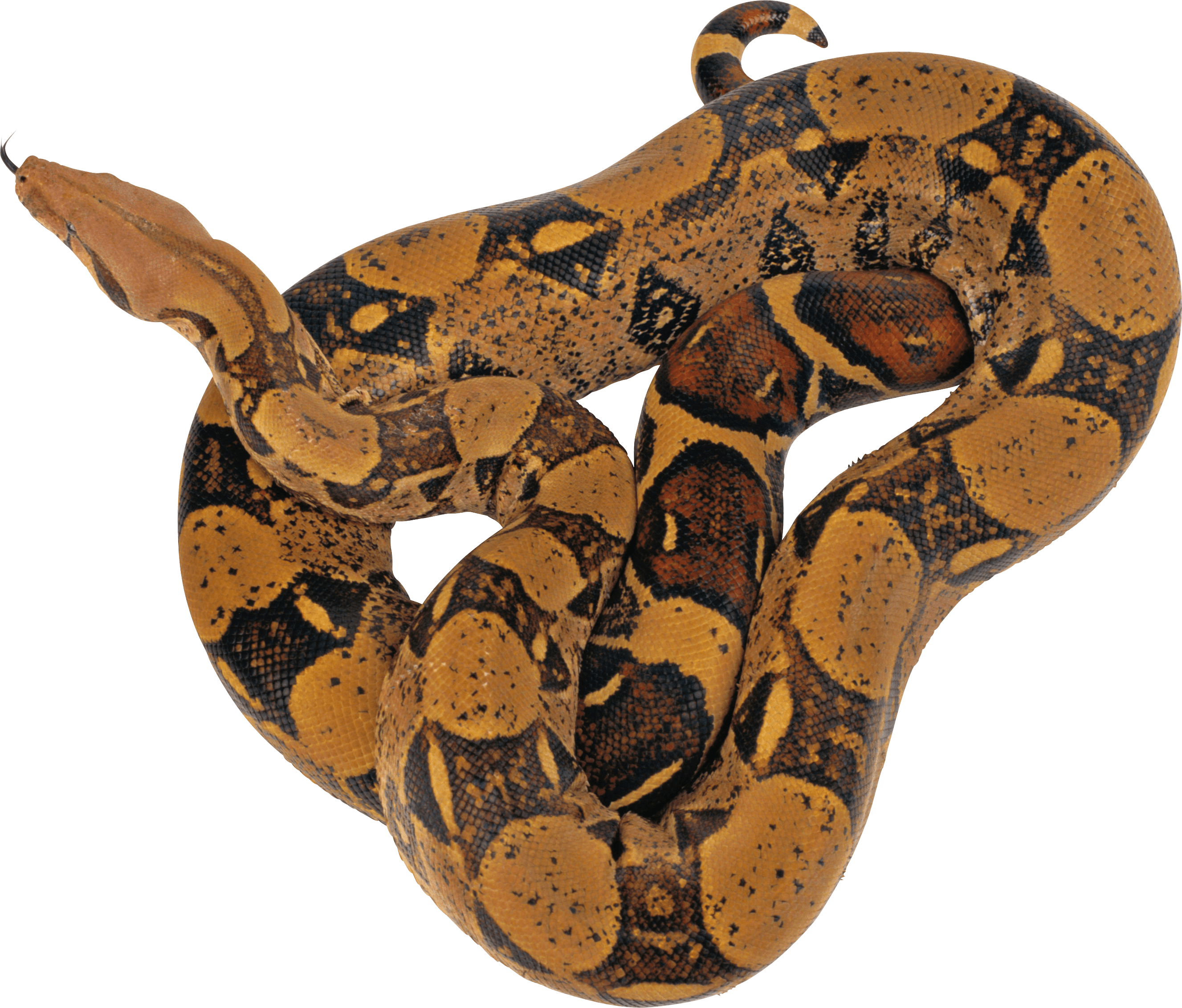 Brown Twirling PNG Image