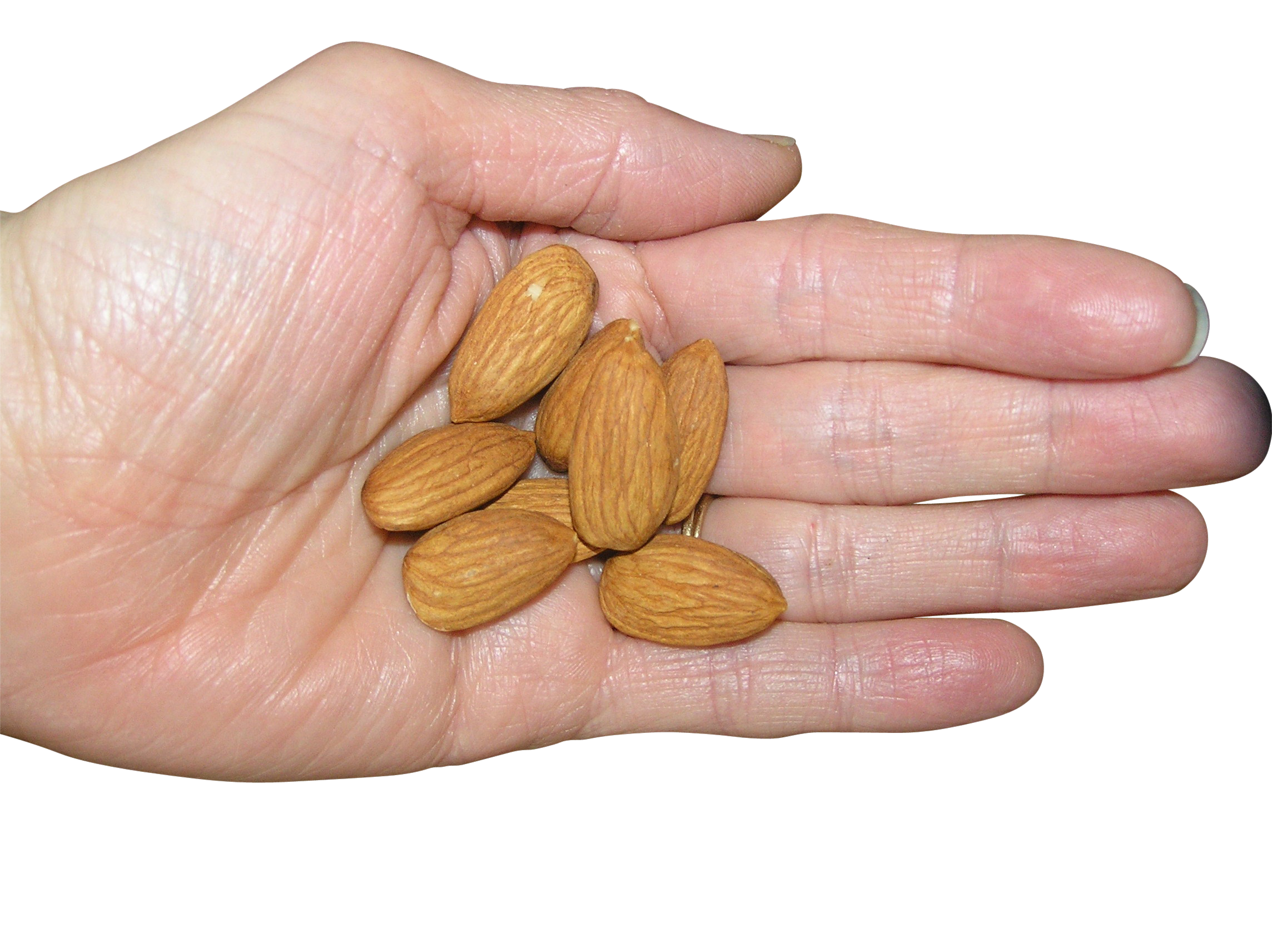 Almond in Hand PNG Image