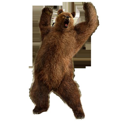 Bear PNG Image