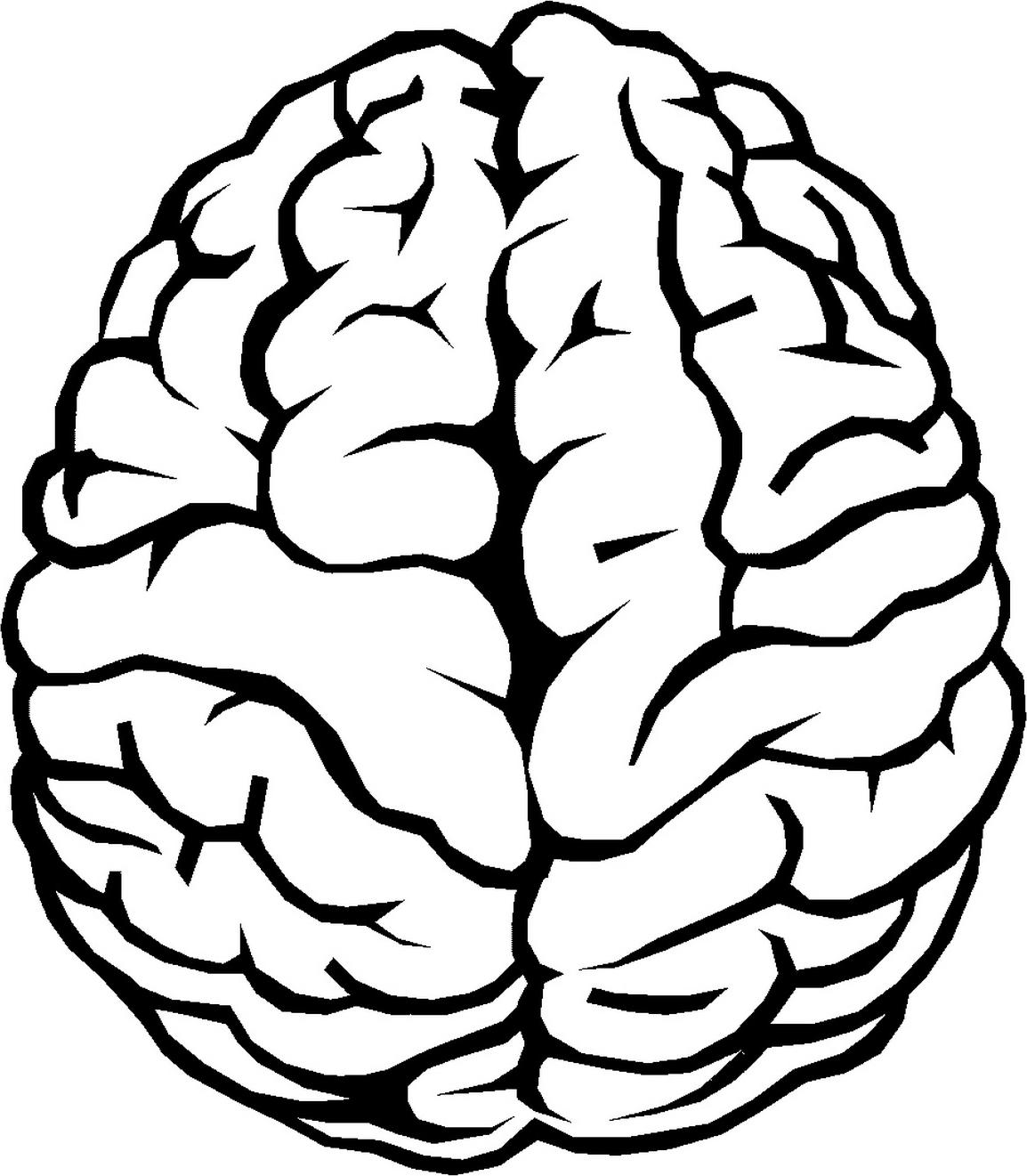 brain outline png image purepng free transparent cc0 png image