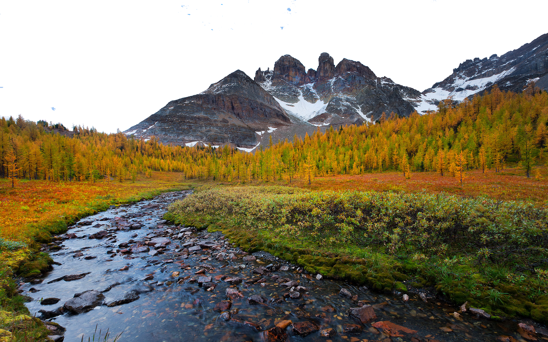 Golden Vegetation by Icy Mountain Tops