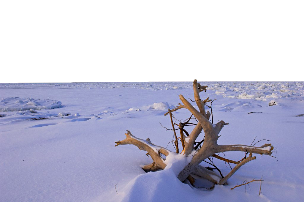 Dried Shrub Sticking out in the Snow PNG Image