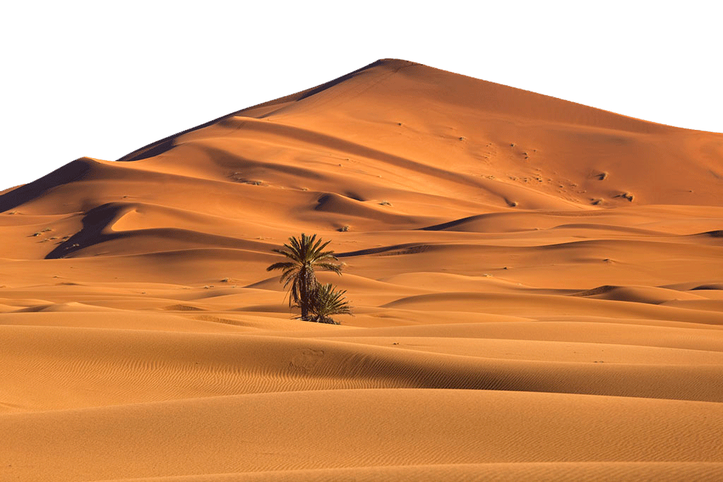 Desert with Desert Palm PNG Image
