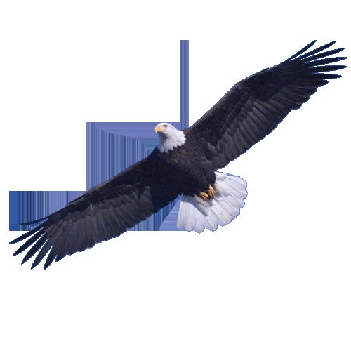 Eagle PNG Image