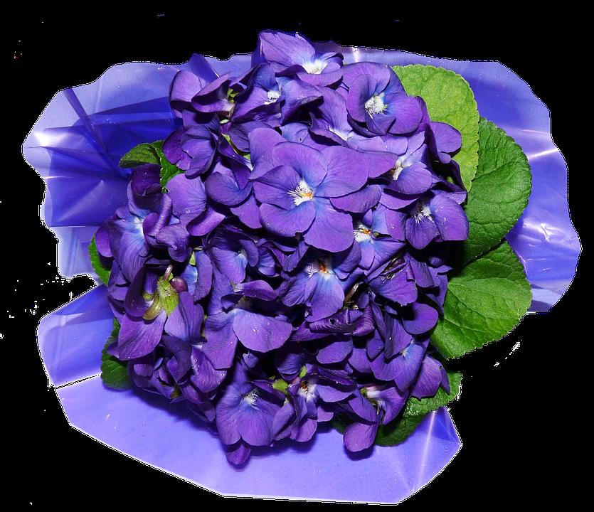 Flower petals PNG Image