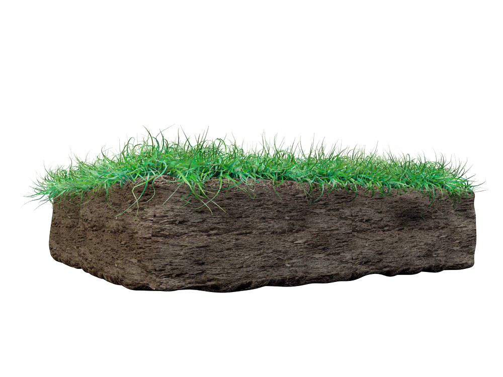 Grass on Mud PNG Image