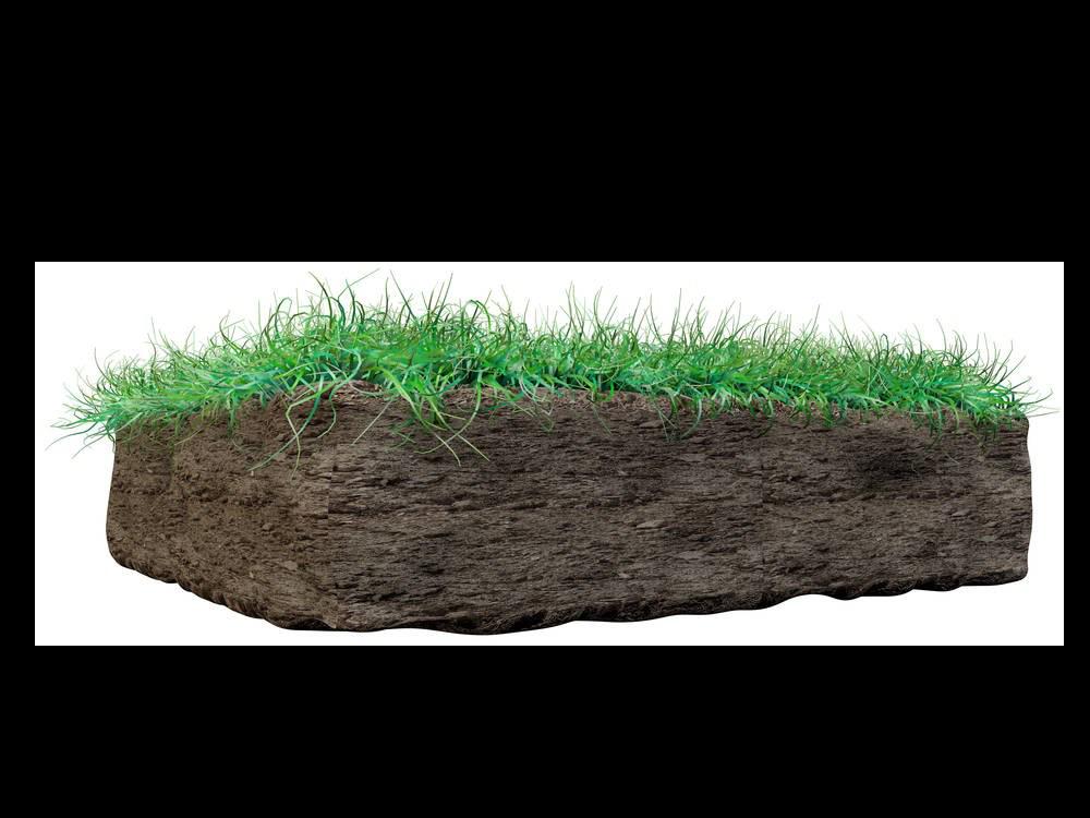 Grass on Mud