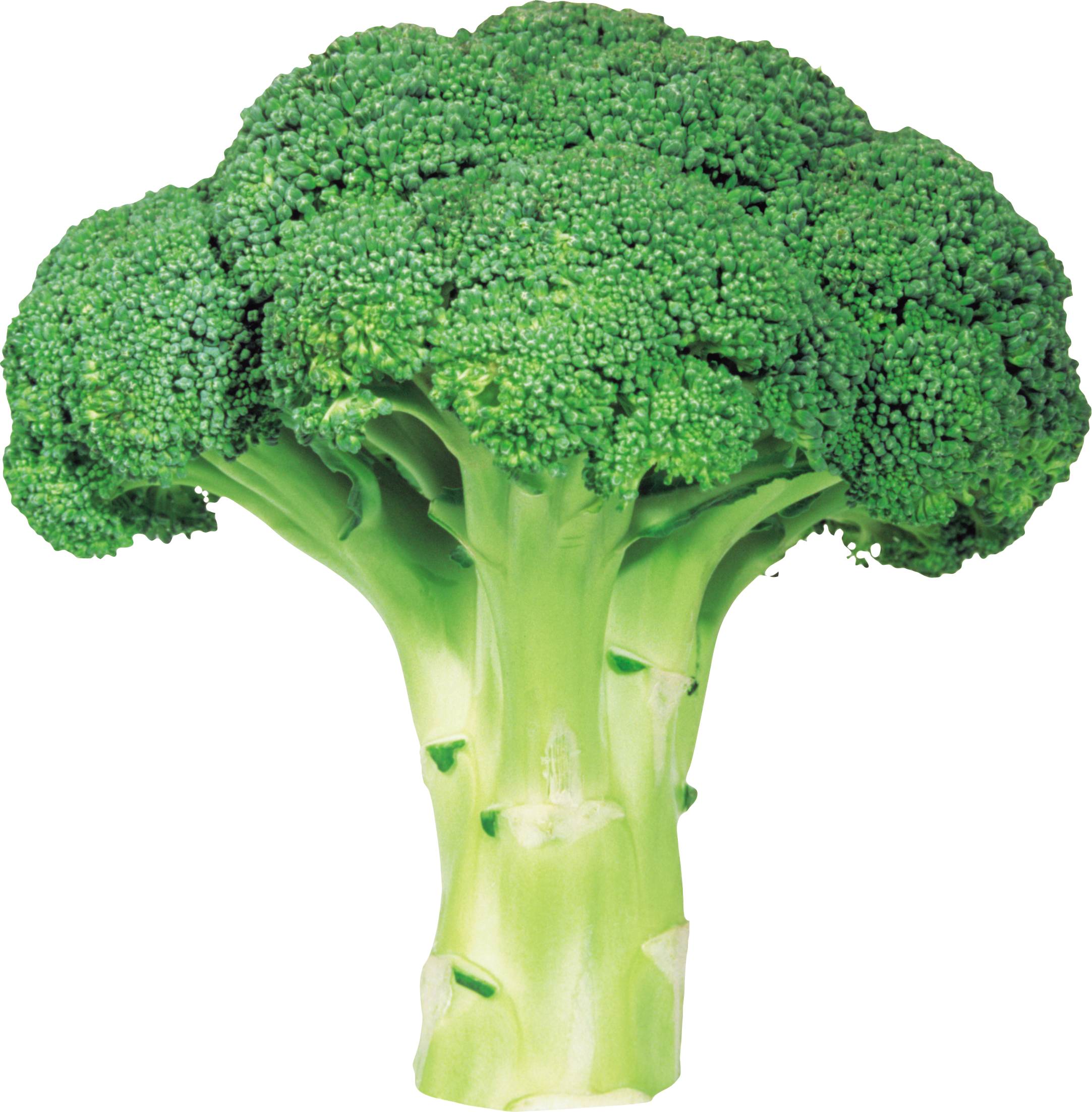 Green Fresh Broccoli