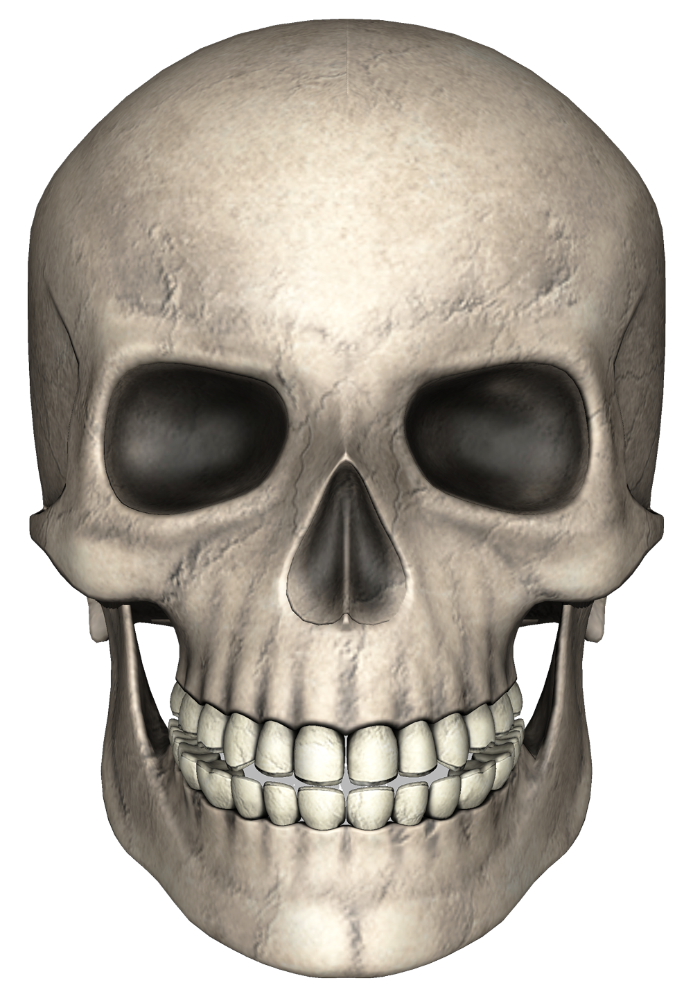 Head Skull PNG Image
