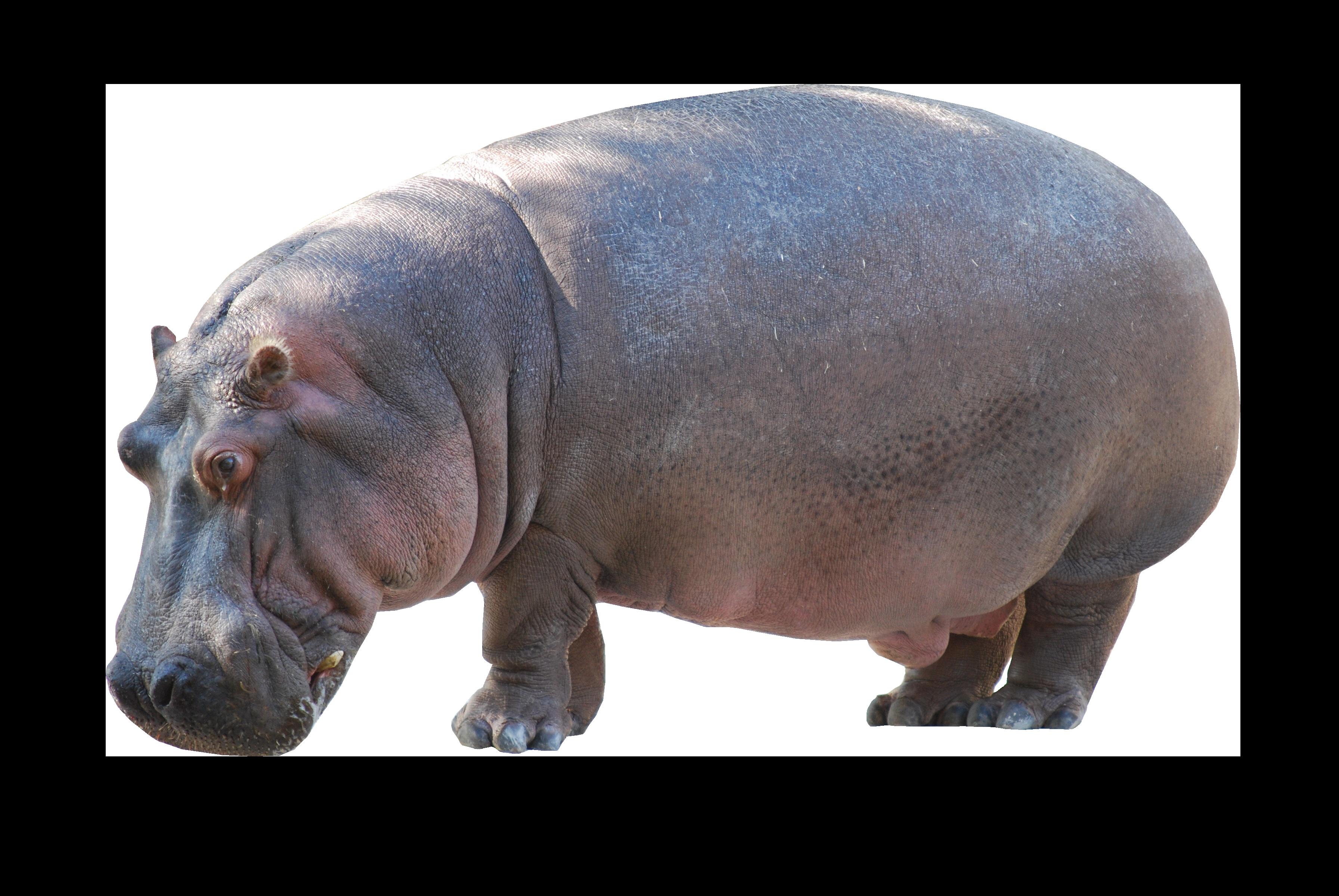 Hippo Free