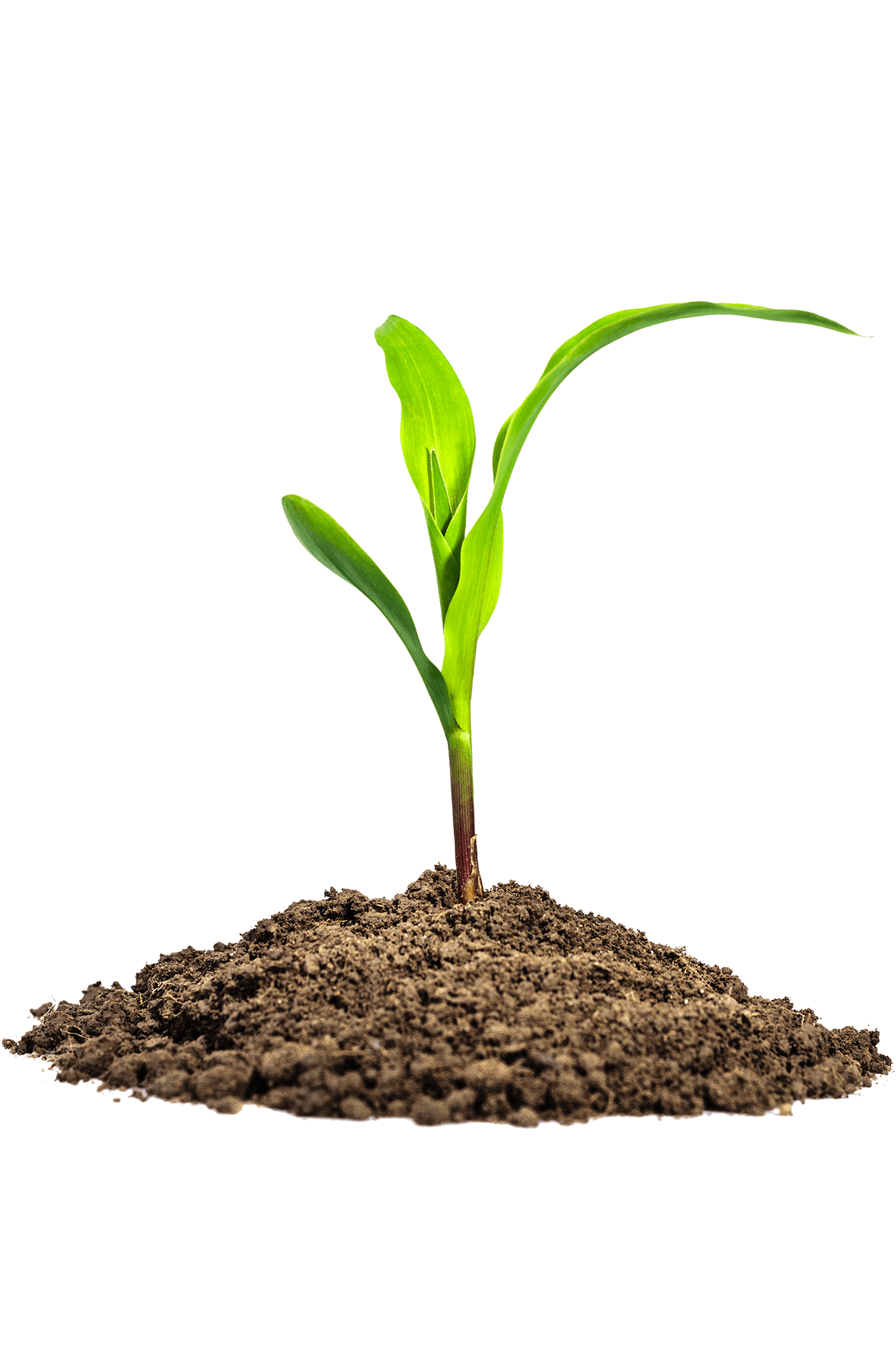 Leaves in Dirt PNG Image