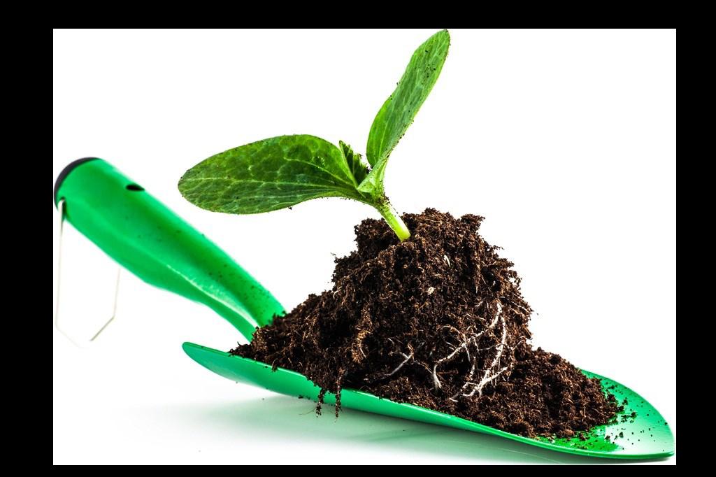 leaves in soil