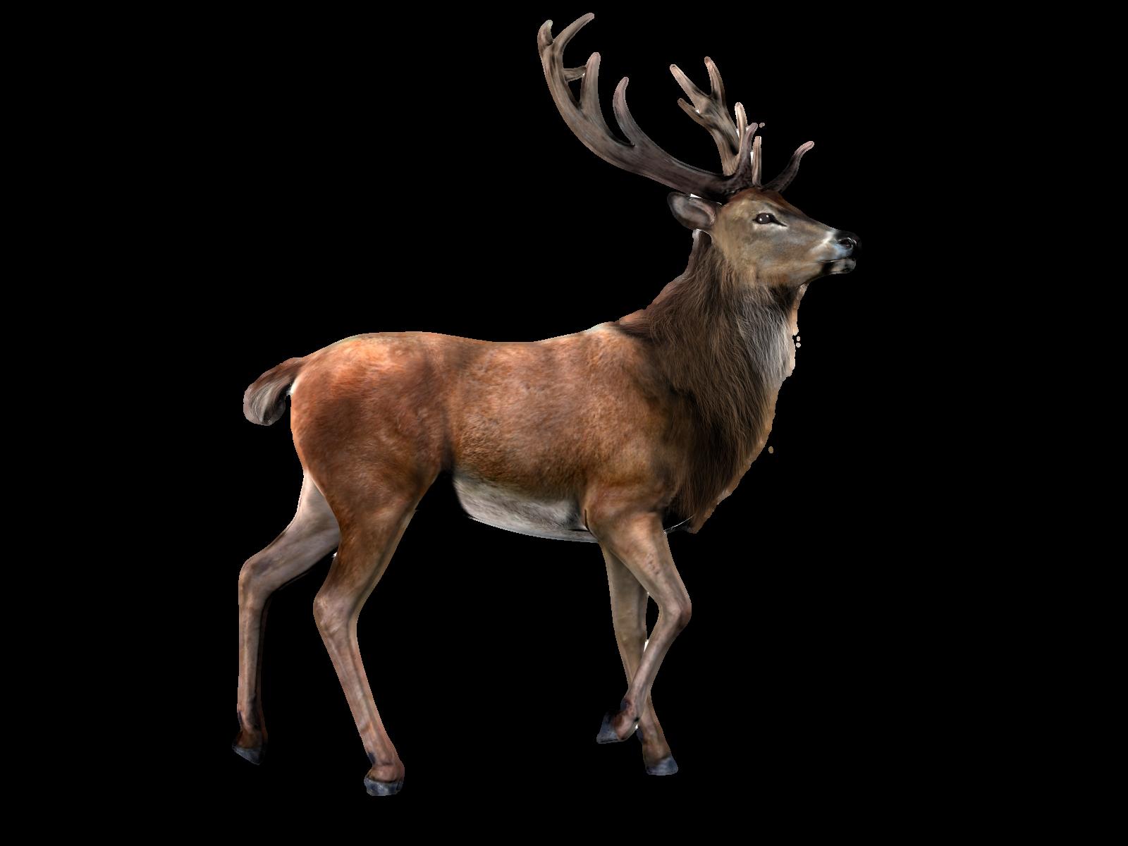 Moose Render